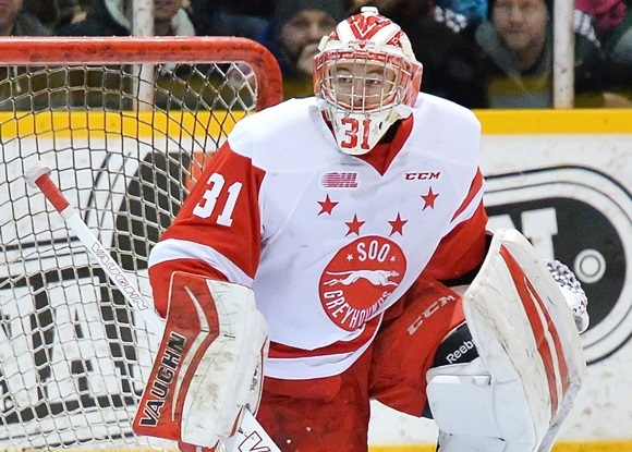 Photo: Brandon Halverson had his best season yet with the Soo Greyhounds, posting a .913 save percentage through his league-leading 40 wins.
